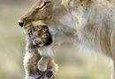 Skämmiga mödrar
