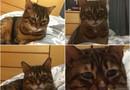 Sorgsen katt