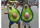Avocadont