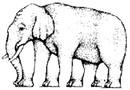 Räkna benen på elefanten