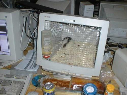 Omgjord datorskärm