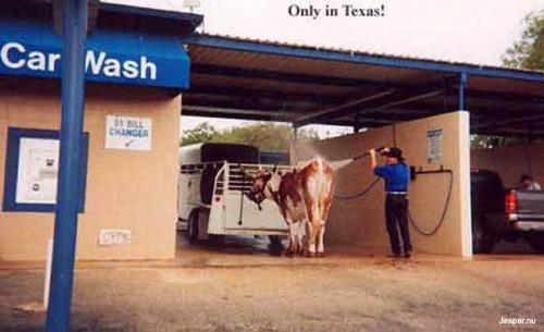 Biltvätt i texas