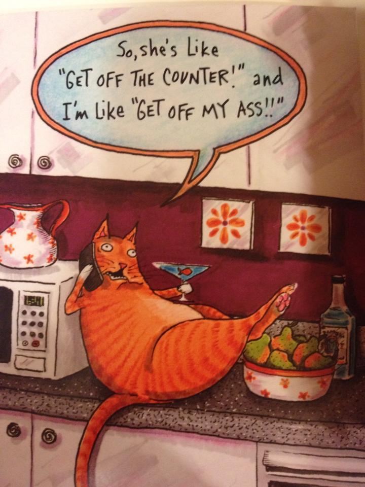 Lat katt