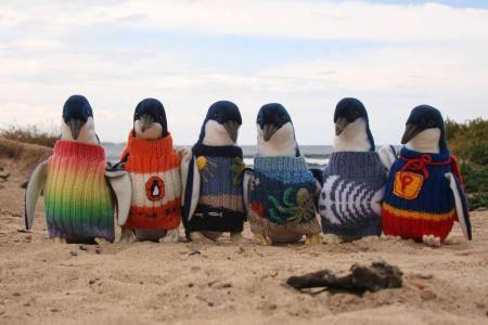 Söta pingviner