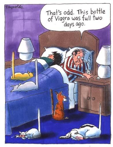 Djuren testar viagra
