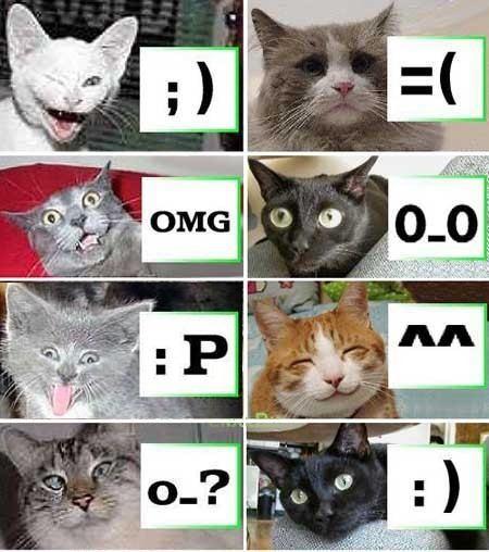 Katter demonstrar smilies