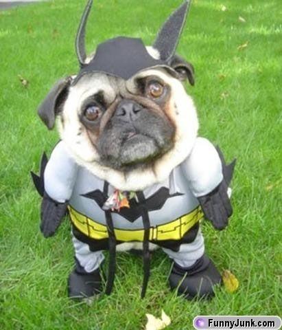 Batman-hund