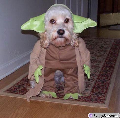 Hund utklädd till Yoda