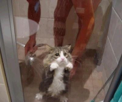 Tror inte katten gillar att duscha
