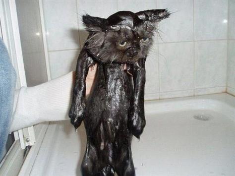 Riktigt våt och deppig kisse