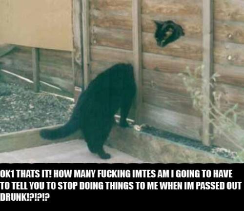 Vissa katter har elaka vänner