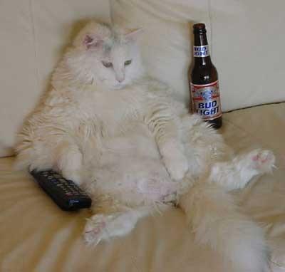 Katt relaxar