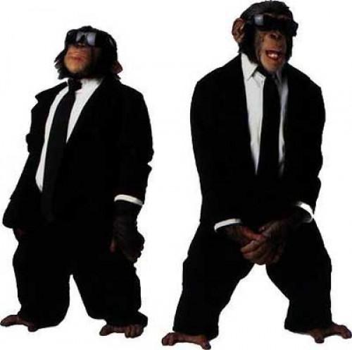 Monkey Bodyguards