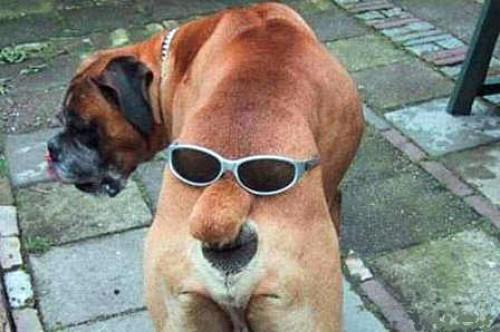 Hunden har två ansikten