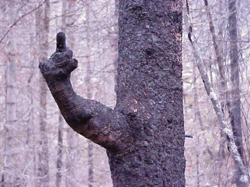 Träd pekar finger