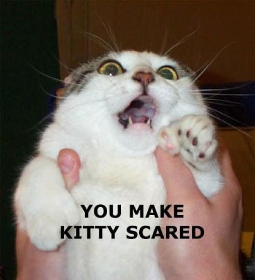 Rädd katt
