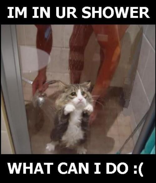 En katt får en dusch