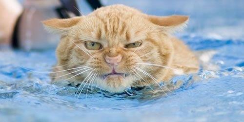 Arg katt