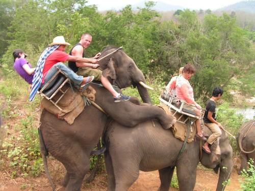Sugen elefant