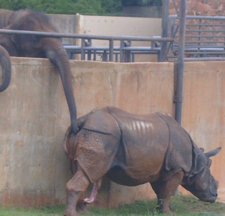 Skum bild från zoo